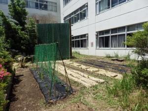 20150530理科室前の畑