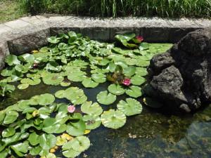 学校前の池①