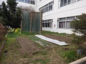 20160305理科室前の畑